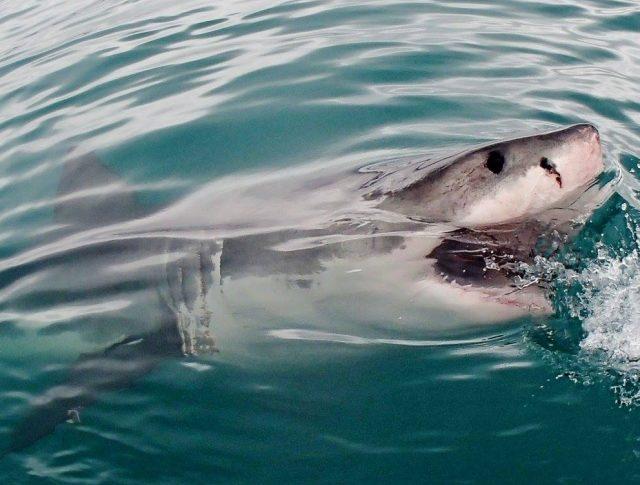 海に潜む危険生物 鮫の対処法