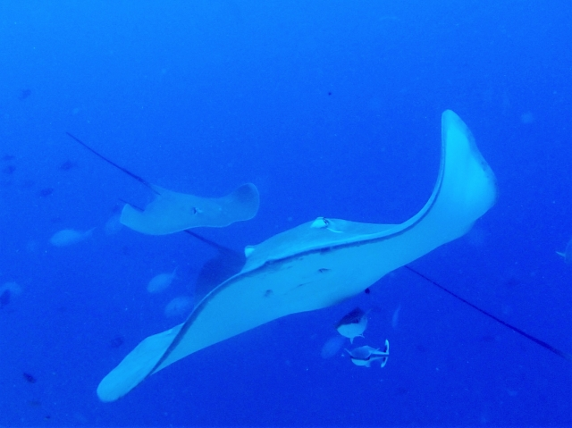 海に潜む危険生物クラゲ・エイの対処法