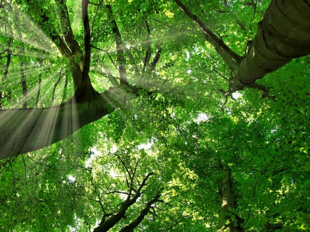 強烈にストレスを感じている方にお勧めするハンモックで森林浴!